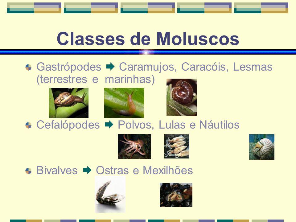 Classes de Moluscos Gastrópodes  Caramujos, Caracóis, Lesmas (terrestres e marinhas) Cefalópodes  Polvos, Lulas e Náutilos.