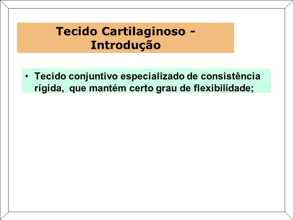 Tecido Cartilaginoso - Introdução