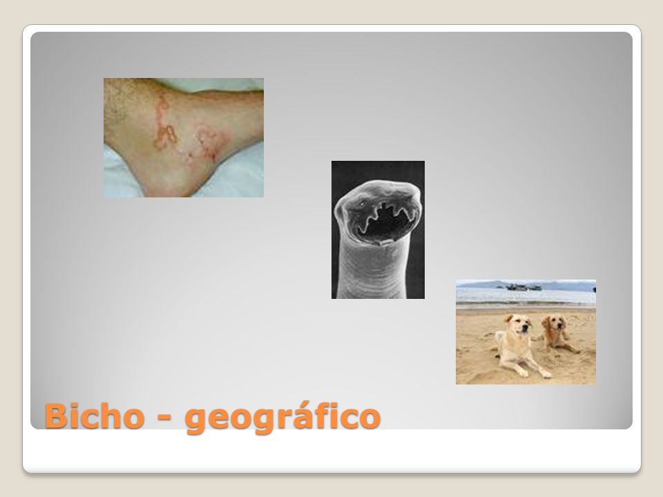 Bicho - geográfico