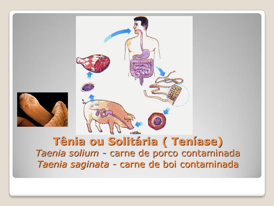 Tênia ou Solitária ( Teníase) Taenia solium - carne de porco contaminada Taenia saginata - carne de boi contaminada