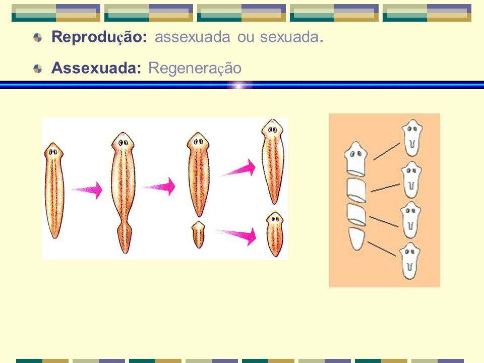 Reprodução: assexuada ou sexuada.
