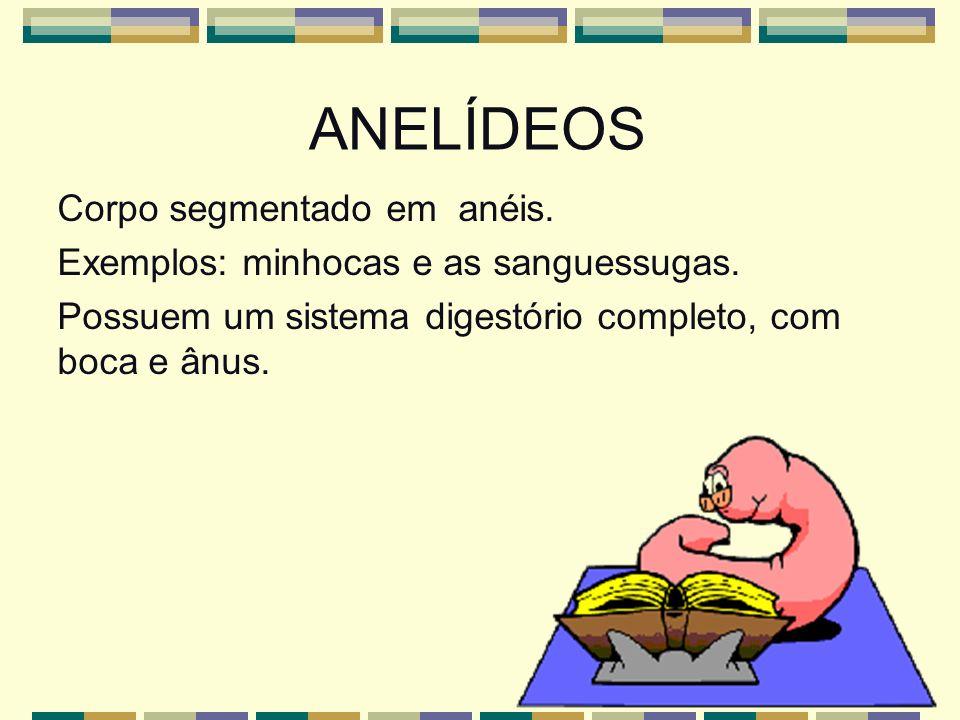 ANELÍDEOS Corpo segmentado em anéis. Exemplos: minhocas e as sanguessugas.