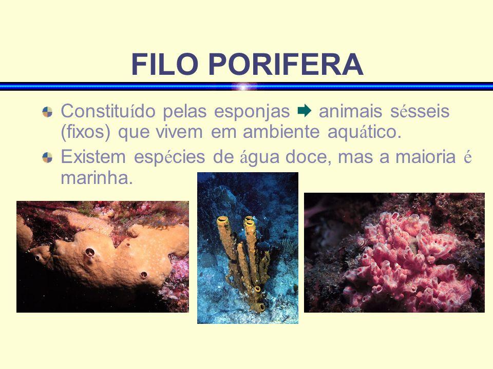 FILO PORIFERAConstituído pelas esponjas  animais sésseis (fixos) que vivem em ambiente aquático.