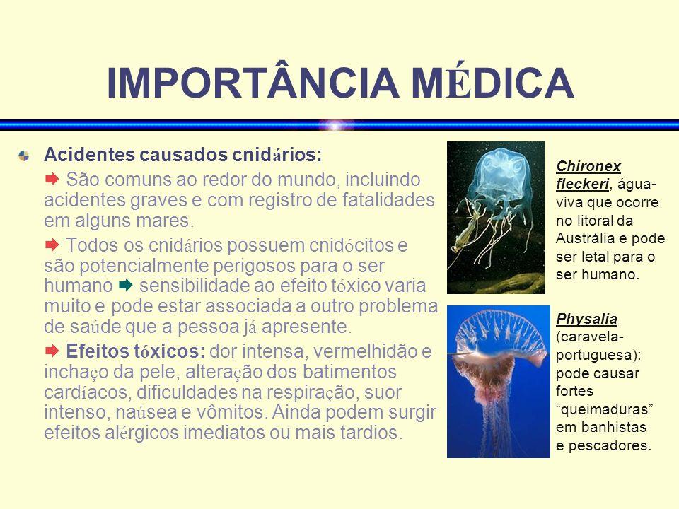 IMPORTÂNCIA MÉDICA Acidentes causados cnidários: