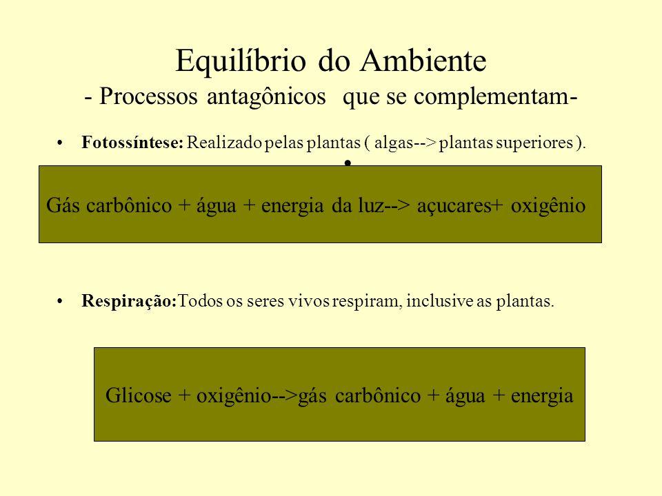 Equilíbrio do Ambiente - Processos antagônicos que se complementam-