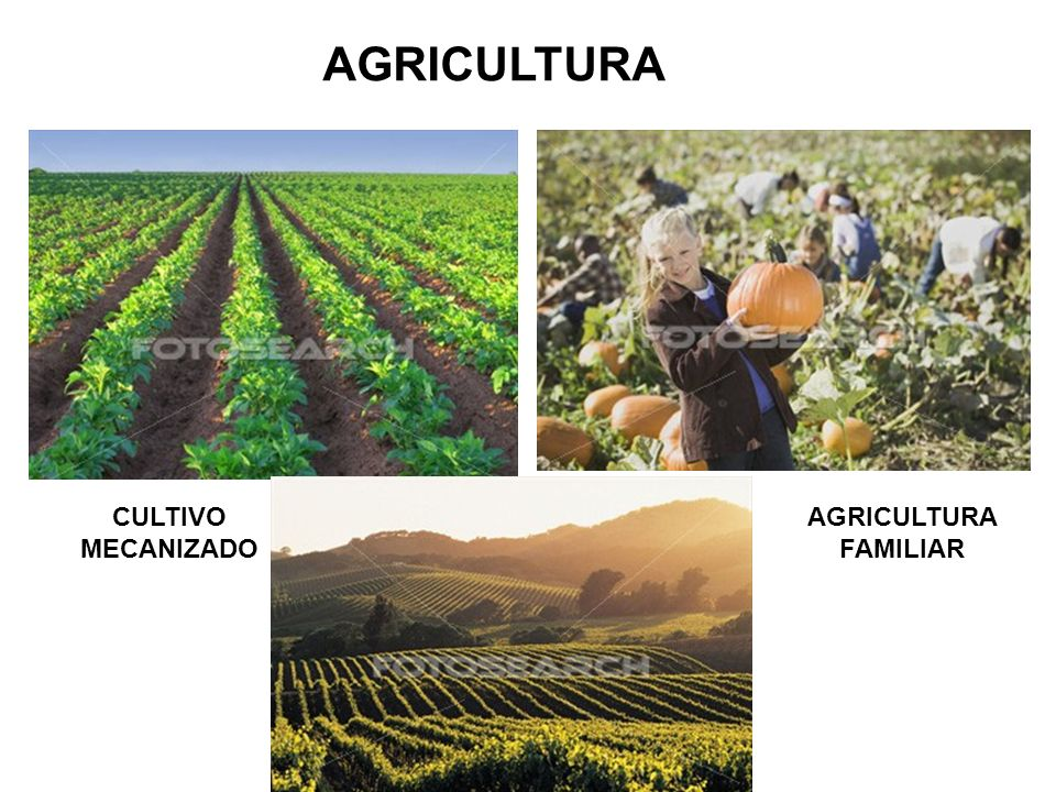 AGRICULTURA CULTIVO MECANIZADO AGRICULTURA FAMILIAR
