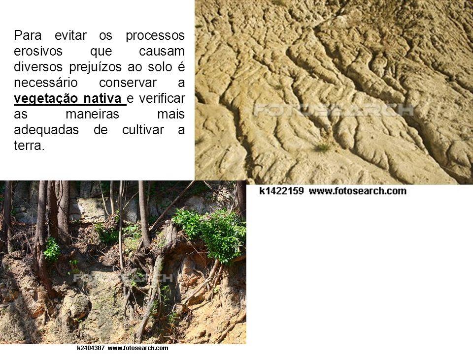 Para evitar os processos erosivos que causam diversos prejuízos ao solo é necessário conservar a vegetação nativa e verificar as maneiras mais adequadas de cultivar a terra.