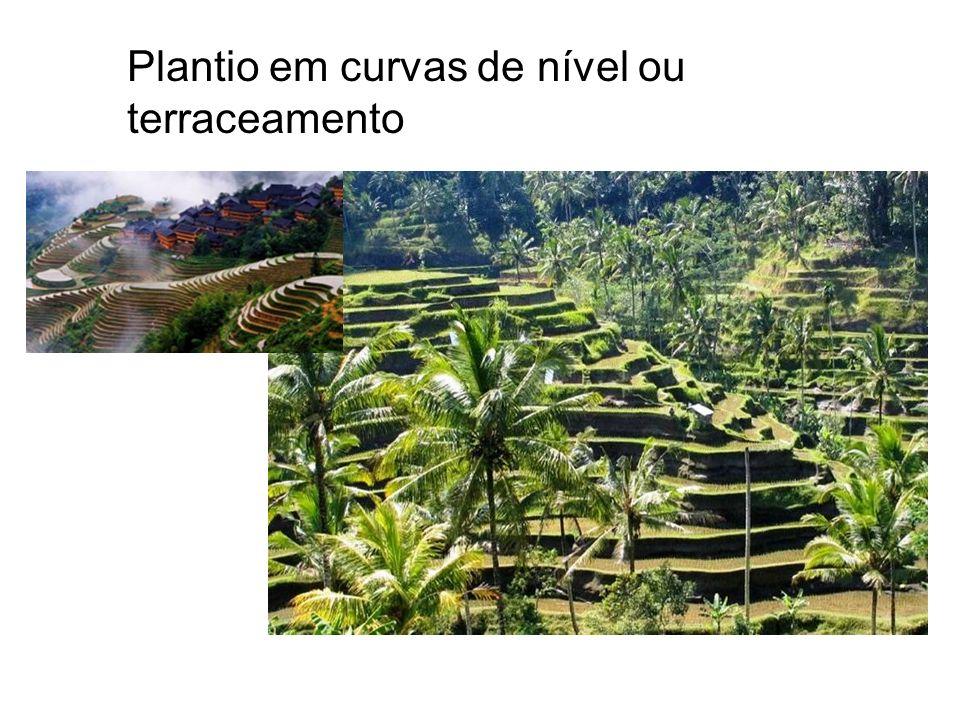 Plantio em curvas de nível ou terraceamento