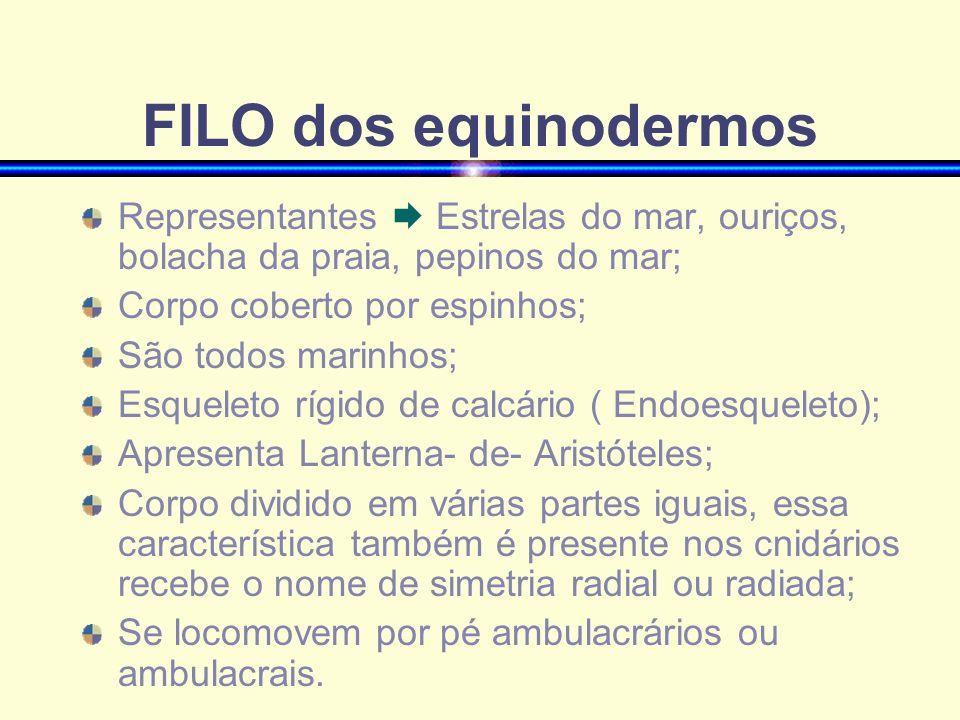FILO dos equinodermos Representantes  Estrelas do mar, ouriços, bolacha da praia, pepinos do mar; Corpo coberto por espinhos;