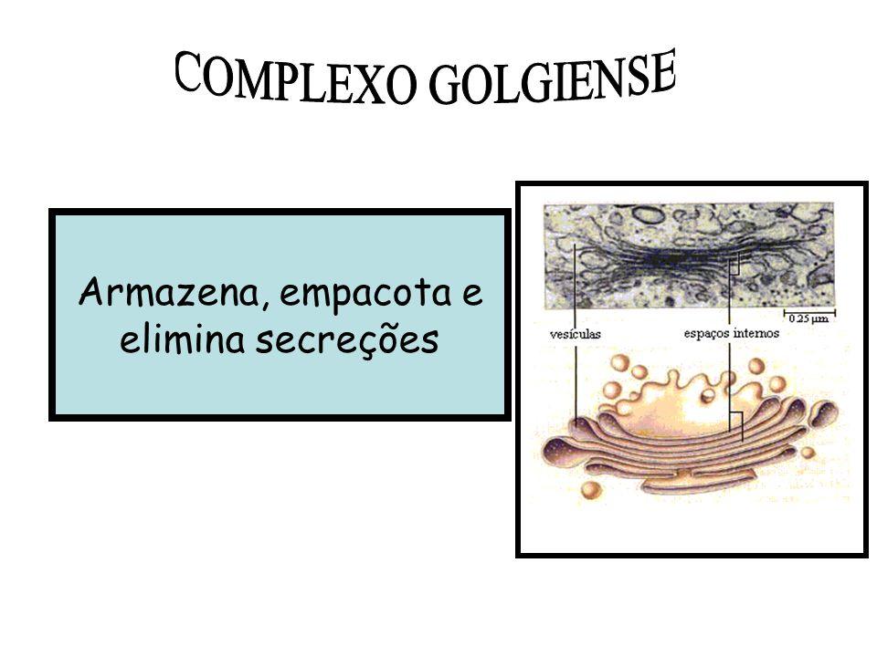 COMPLEXO GOLGIENSE Armazena, empacota e elimina secreções