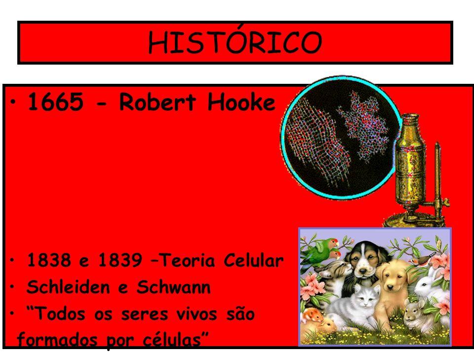 HISTÓRICO 1665 - Robert Hooke 1838 e 1839 –Teoria Celular