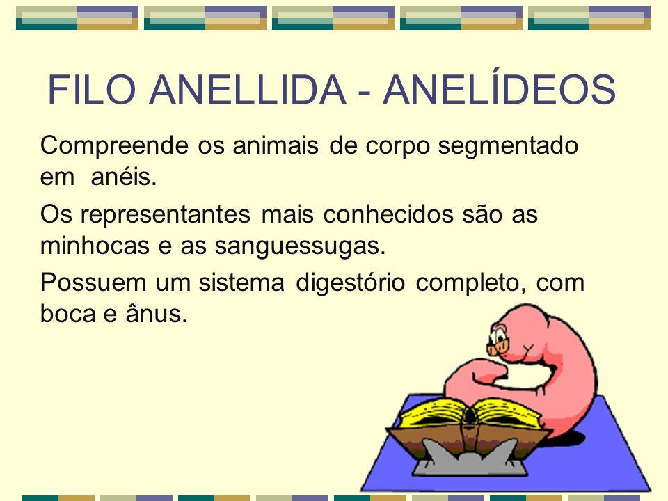 FILO ANELLIDA - ANELÍDEOS