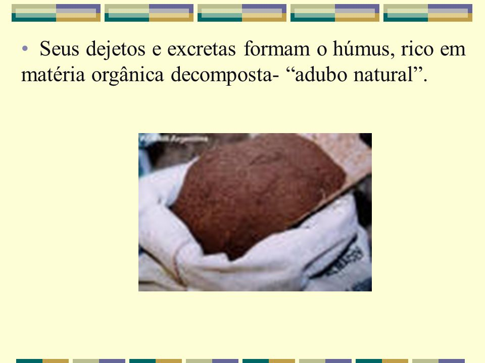 Seus dejetos e excretas formam o húmus, rico em matéria orgânica decomposta- adubo natural .