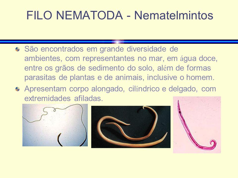 FILO NEMATODA - Nematelmintos