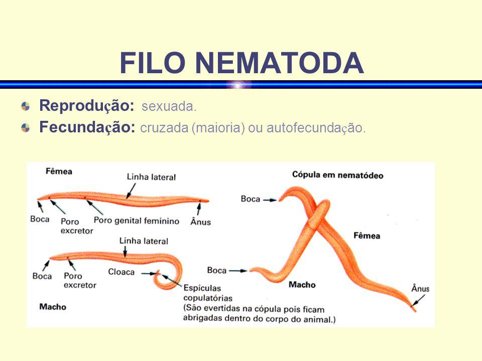 FILO NEMATODA Reprodução: sexuada.