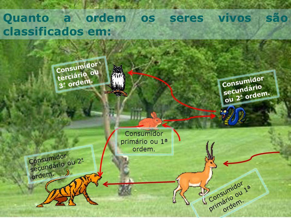 Quanto a ordem os seres vivos são classificados em: