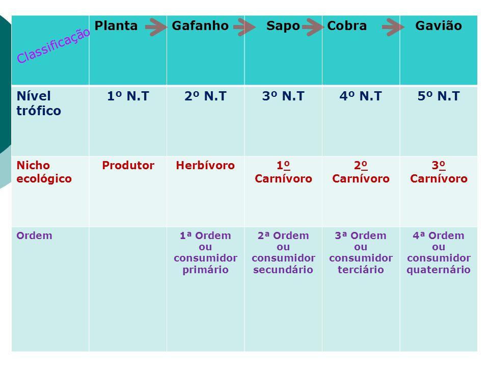 Sapo Gavião 1º N.T 2º N.T 3º N.T 4º N.T 5º N.T