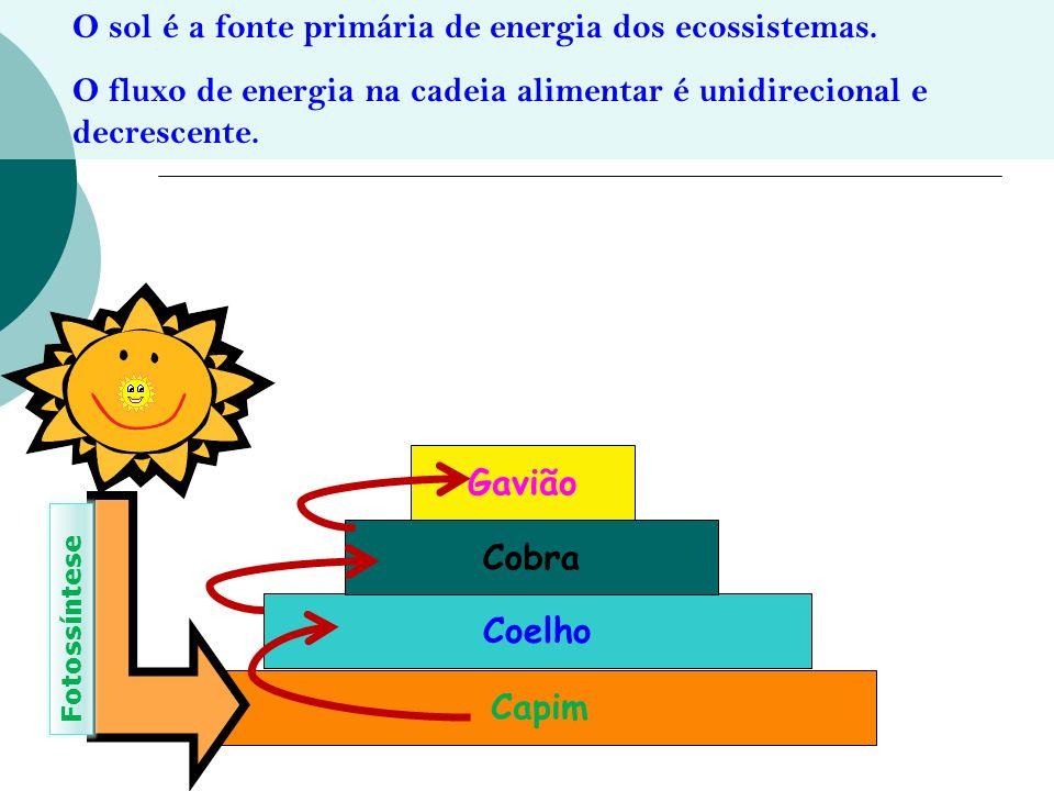Gavião Cobra Coelho Capim
