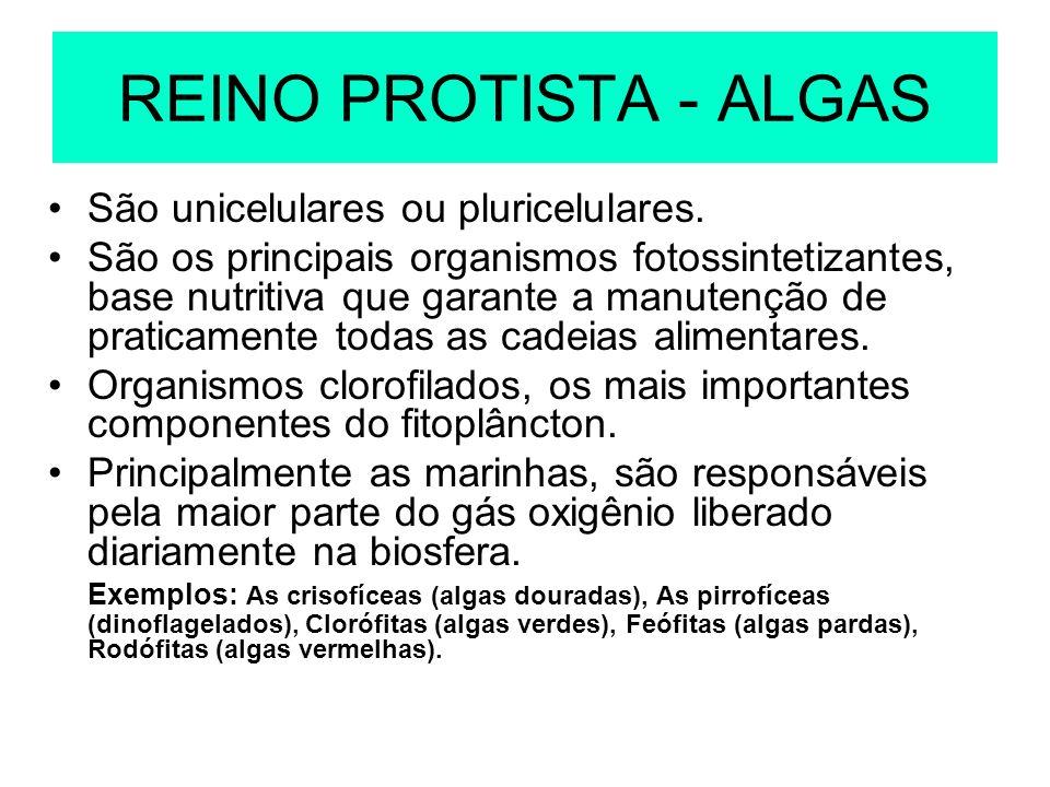 REINO PROTISTA - ALGAS São unicelulares ou pluricelulares.
