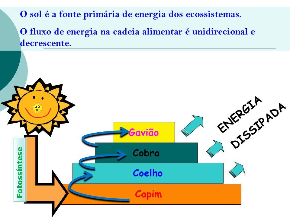 O sol é a fonte primária de energia dos ecossistemas.