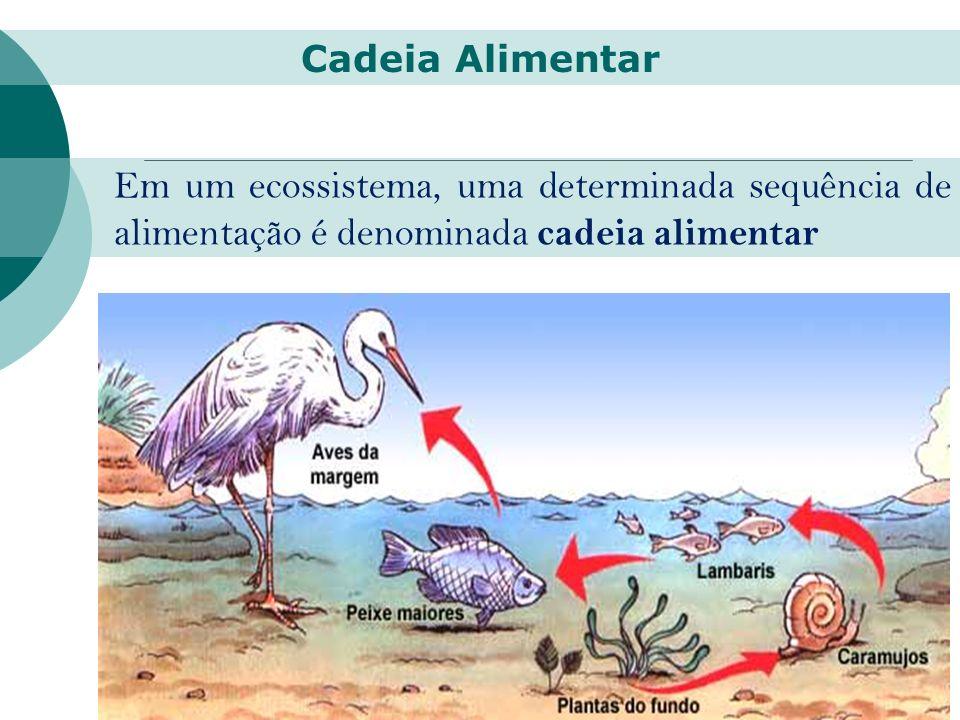 Cadeia Alimentar Em um ecossistema, uma determinada sequência de alimentação é denominada cadeia alimentar.