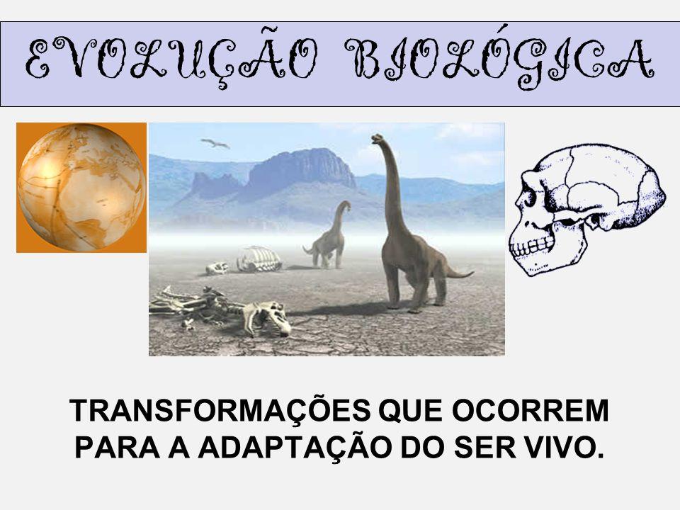 TRANSFORMAÇÕES QUE OCORREM PARA A ADAPTAÇÃO DO SER VIVO.