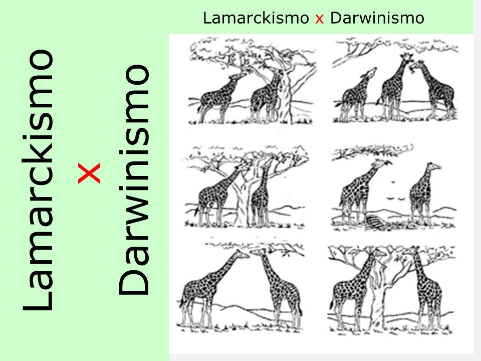 Lamarckismo x Darwinismo