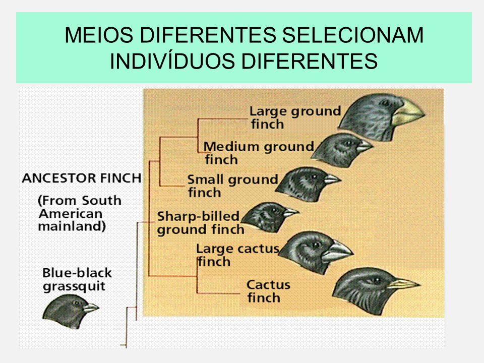 MEIOS DIFERENTES SELECIONAM INDIVÍDUOS DIFERENTES