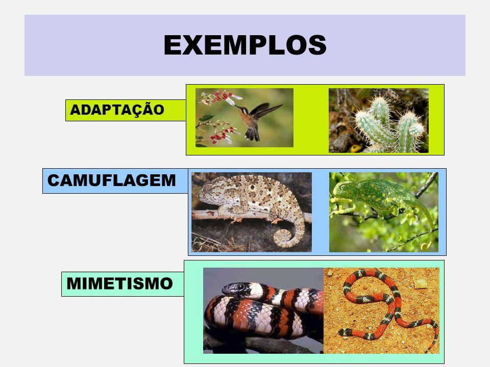 EXEMPLOS ADAPTAÇÃO CAMUFLAGEM MIMETISMO