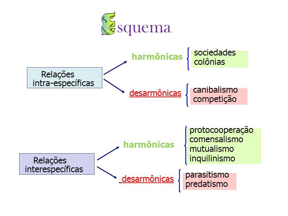 squema harmônicas sociedades colônias Relações intra-específicas