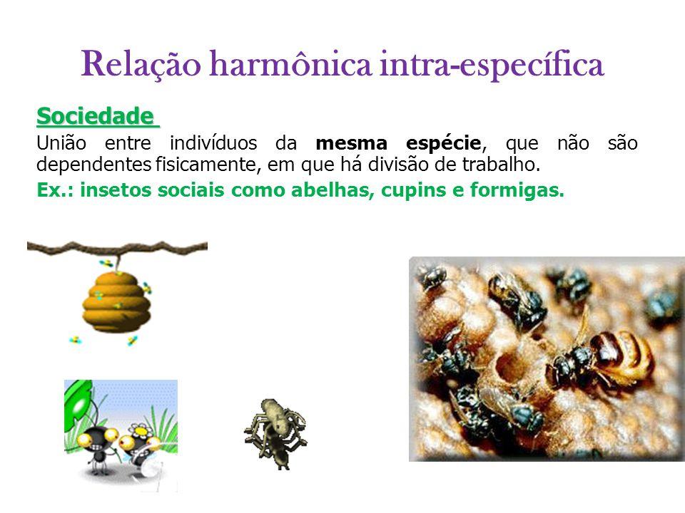 Relação harmônica intra-específica