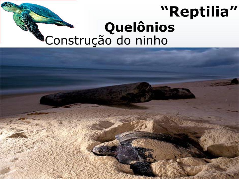 Reptilia Quelônios Construção do ninho Postura e nascimento