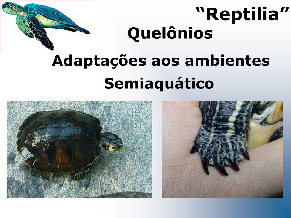 Adaptações aos ambientes