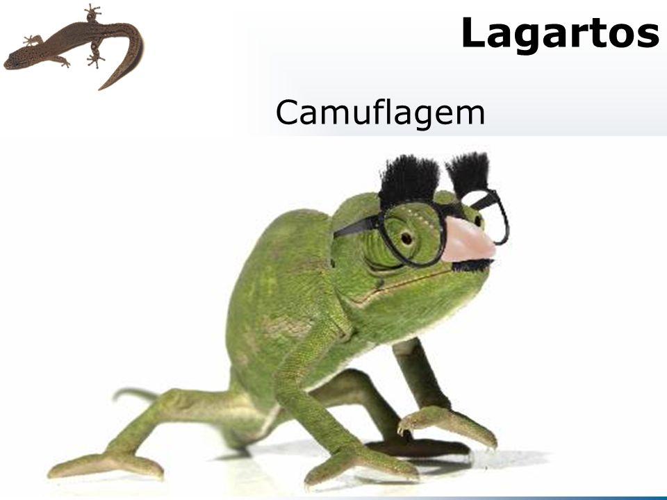 Lagartos Camuflagem