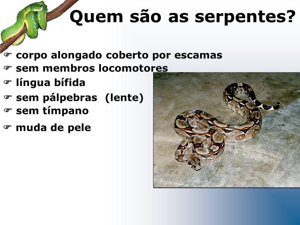 Quem são as serpentes  corpo alongado coberto por escamas