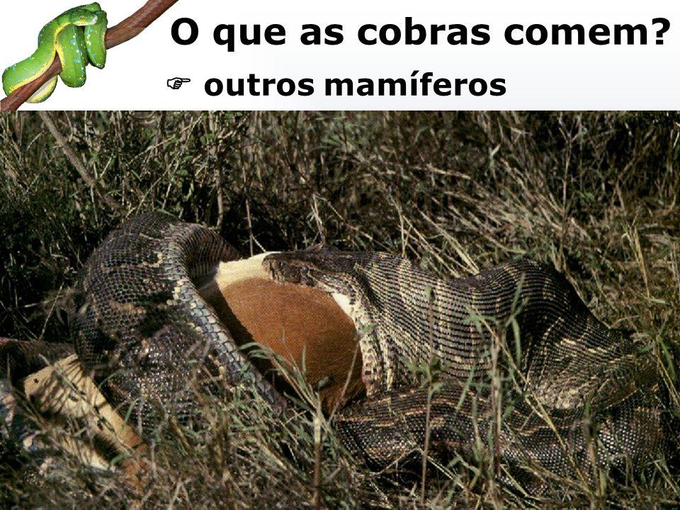 O que as cobras comem  outros mamíferos