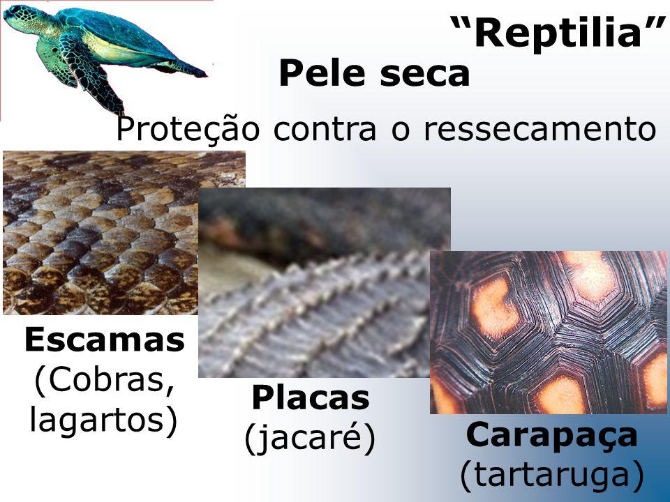 Reptilia Pele seca Proteção contra o ressecamento Escamas