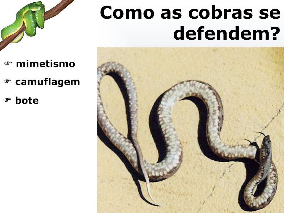 Como as cobras se defendem