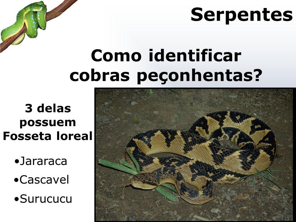 Como identificar cobras peçonhentas 3 delas possuem Fosseta loreal