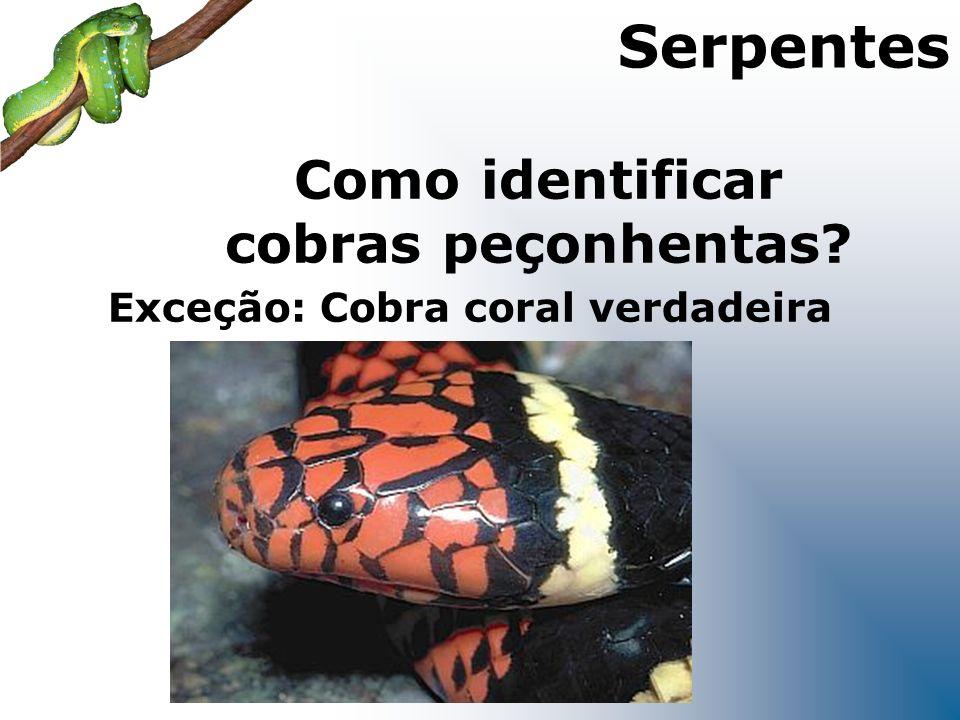 Como identificar cobras peçonhentas Exceção: Cobra coral verdadeira