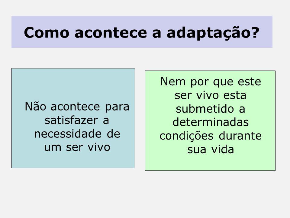 Como acontece a adaptação