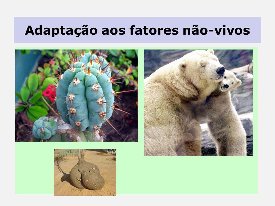 Adaptação aos fatores não-vivos