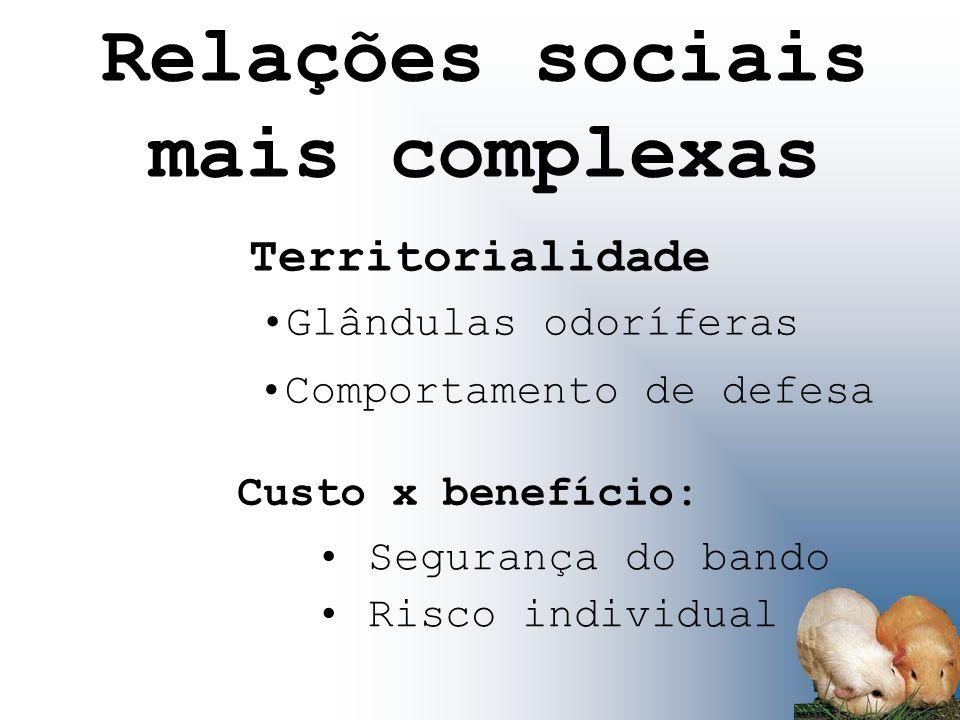 Relações sociais mais complexas