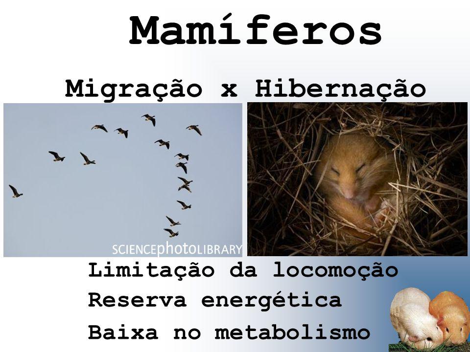 Mamíferos Migração x Hibernação Limitação da locomoção