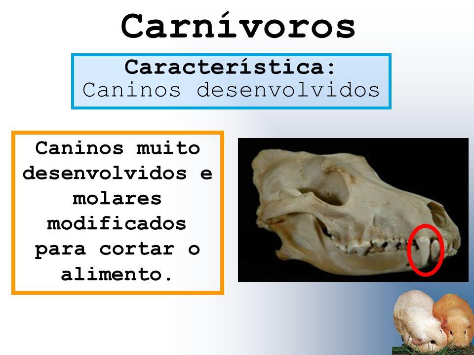 Característica: Caninos desenvolvidos