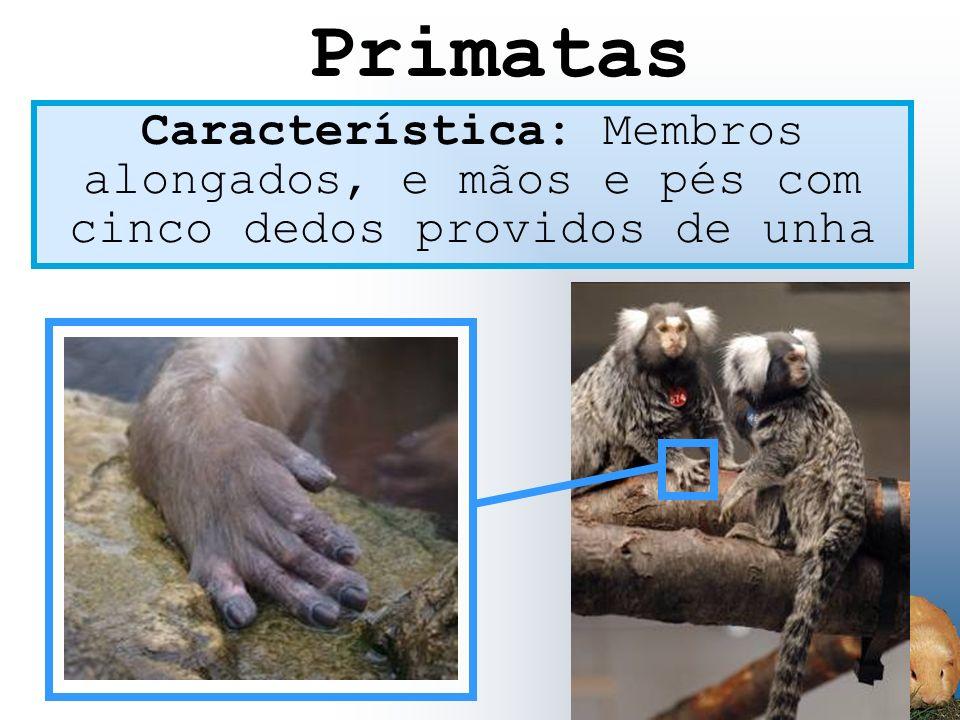 Primatas Característica: Membros alongados, e mãos e pés com cinco dedos providos de unha