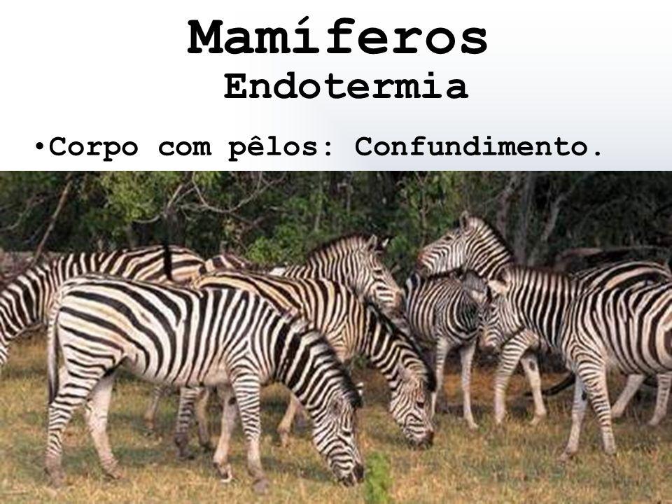 Mamíferos Endotermia Corpo com pêlos: Confundimento.