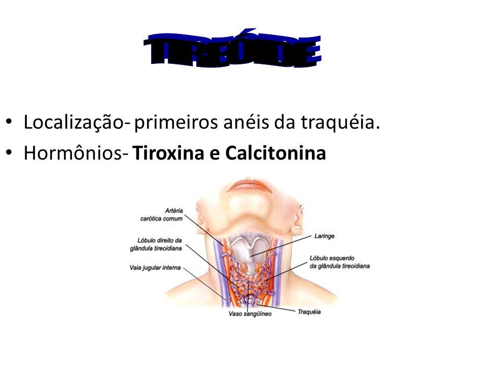 TIREÓIDE Localização- primeiros anéis da traquéia.