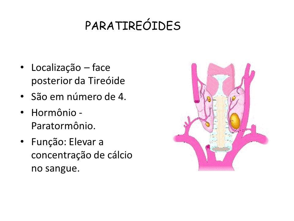 PARATIREÓIDES Localização – face posterior da Tireóide