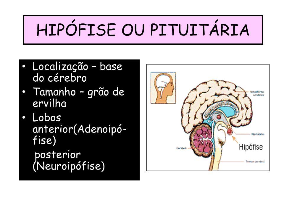 HIPÓFISE OU PITUITÁRIA